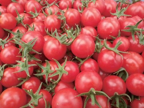 I seminativi FOIL//irrigato Farm paeseNMprima della release PROMOGer